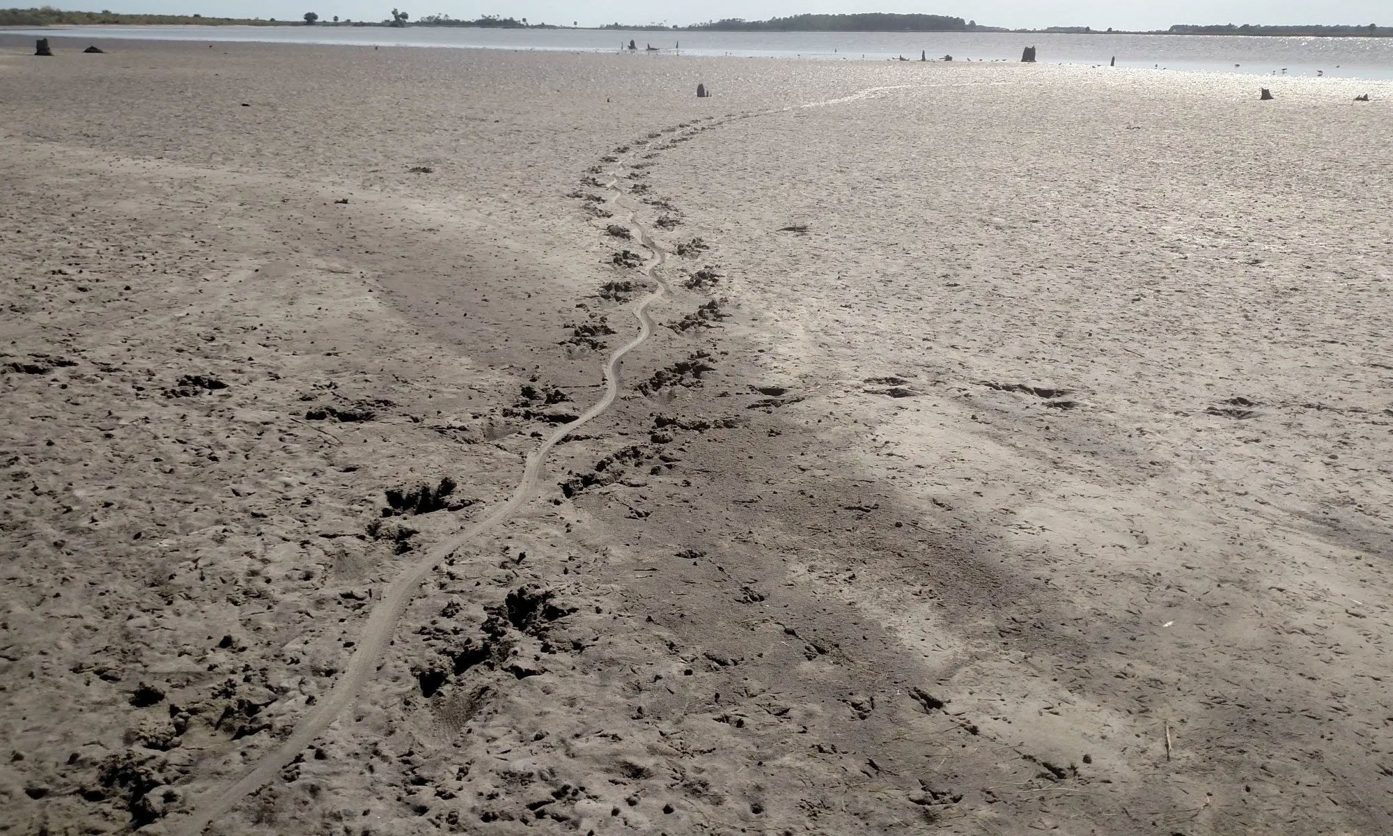 tortoise footprints in the sand